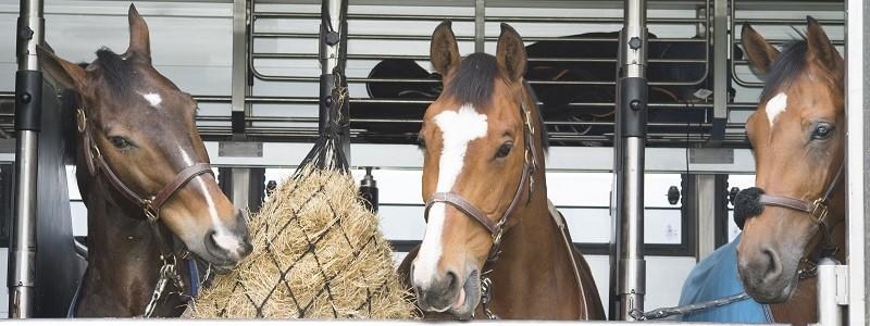Paardenvrachtwagen of paardenbusje goedkoop verzekeren…